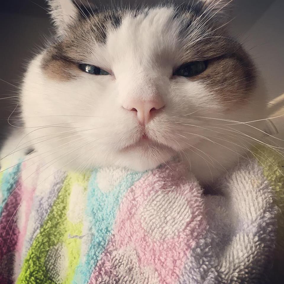 亢進 機能 猫 症 甲状腺